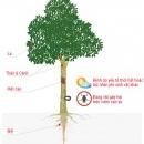Giới thiệu trang mạng chẩn đoán dịch hại trên cây cao su